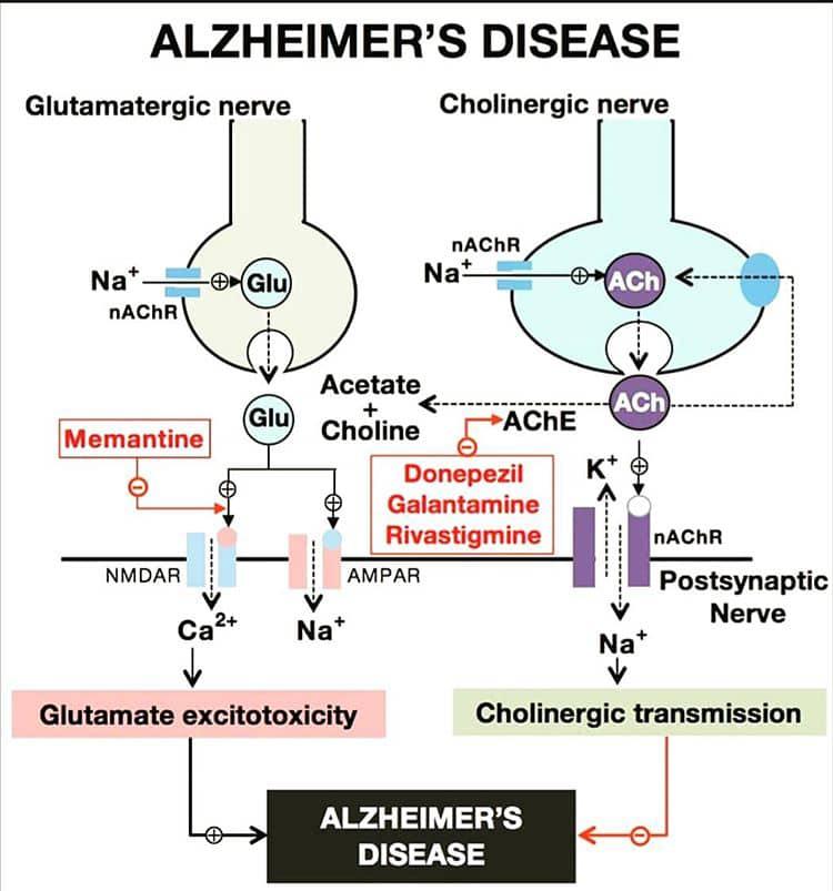 مکانیسم عمل داروهای ضد آلزایمر